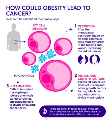 obesity-cause-cancer_v02-01.png