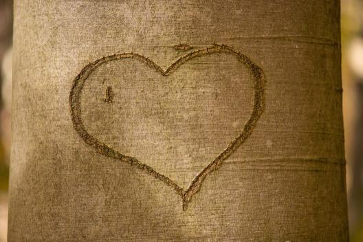 heart-1787863_960_720