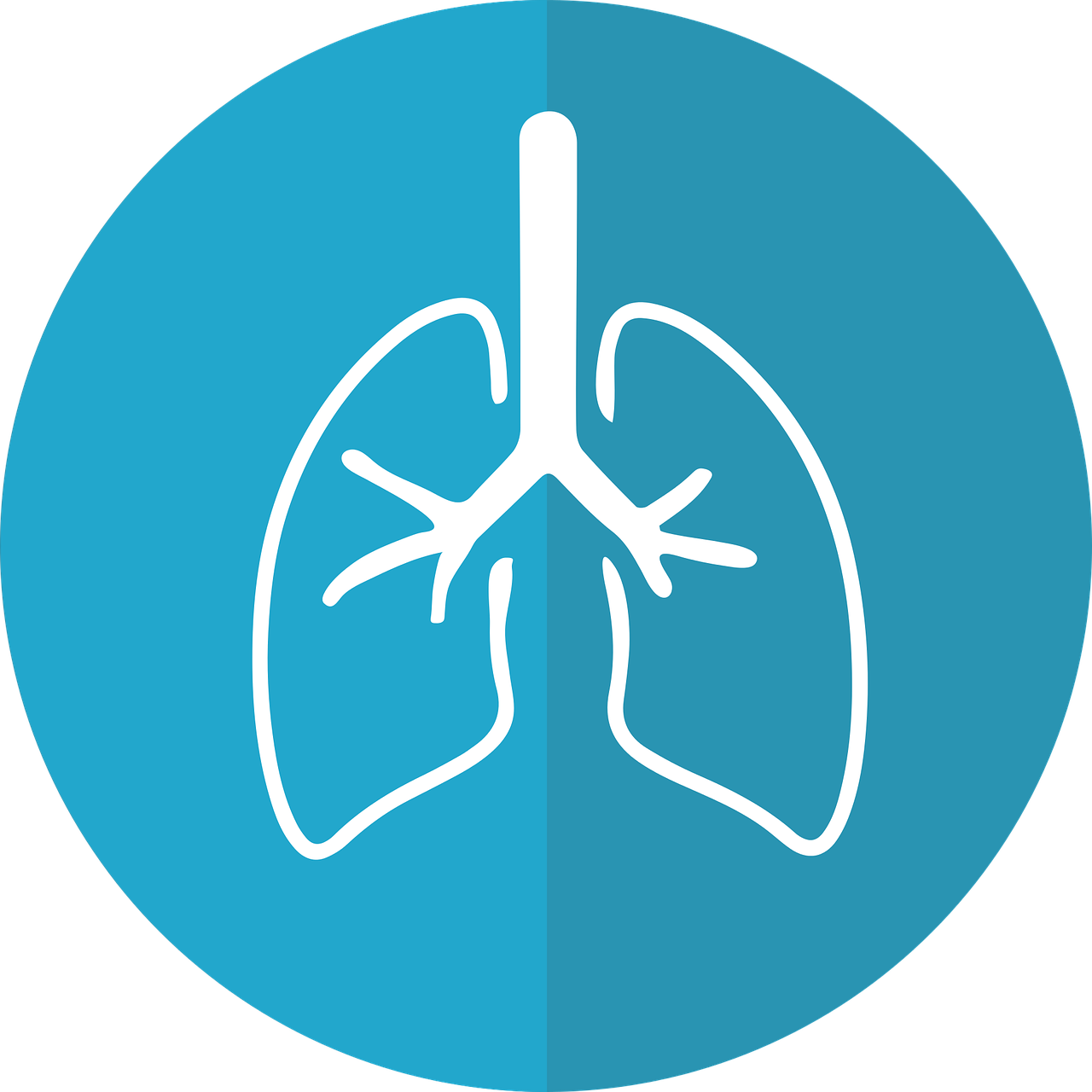 lungs-2803208_1280